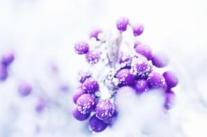 09-Berries_by_Tom_Kijas