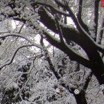 Exibindo neve no Gnome com a extensão Gsnow