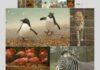 Como instalar o Mountain Tapir Collage Maker no Linux via Snap