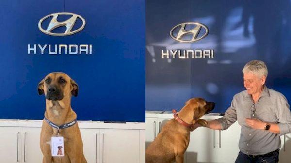 Showroom da Hyundai no Brasil adotou cachorro de rua e fez dele um vendedor
